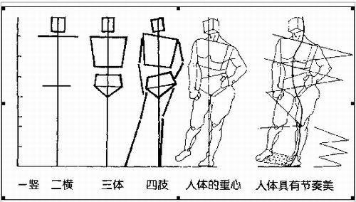 人体的形体结构?